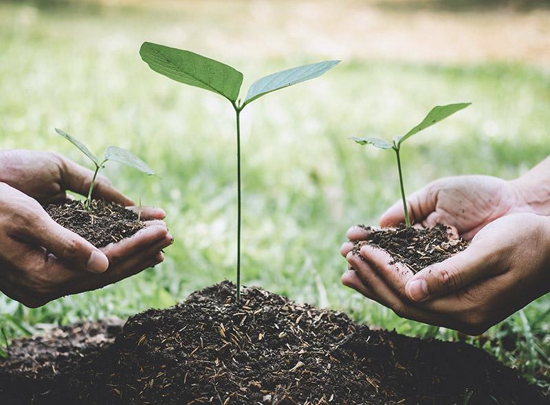 Rodung in Röthenbach für Immobilien wird durch Neupflanzung kompensiert | BERGER GRUPPE Nürnberg