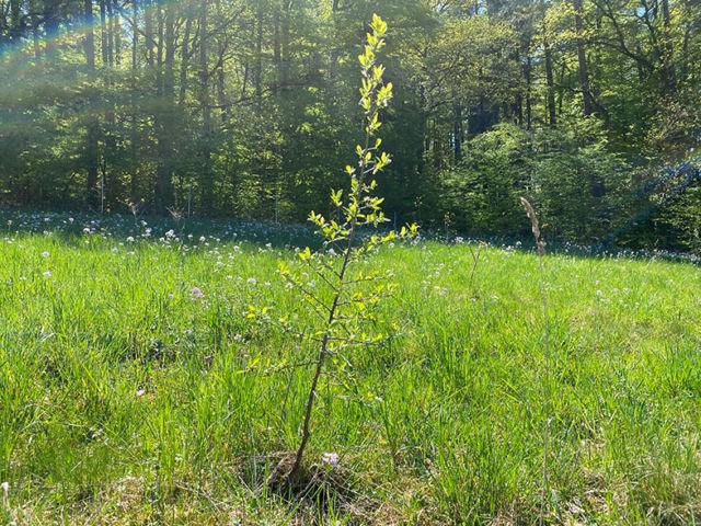 Ersatzaufforstung / Neupflanzung für Immobilienprojekt Am Kinoberg in Röthenbach |Berger Gruppe
